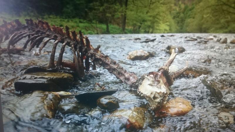 El río Urumea y el esqueleto.