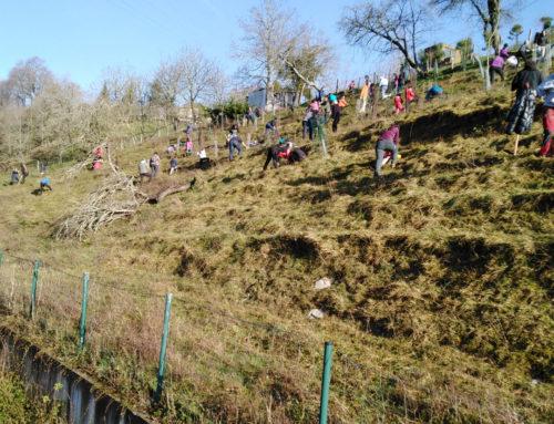 100 voluntarios plantan 260 árboles autóctonos en Errekatxulo, Añorga